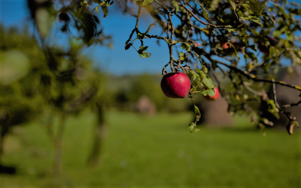 Orchards near Bromont for a colourful and tasty autumn activity