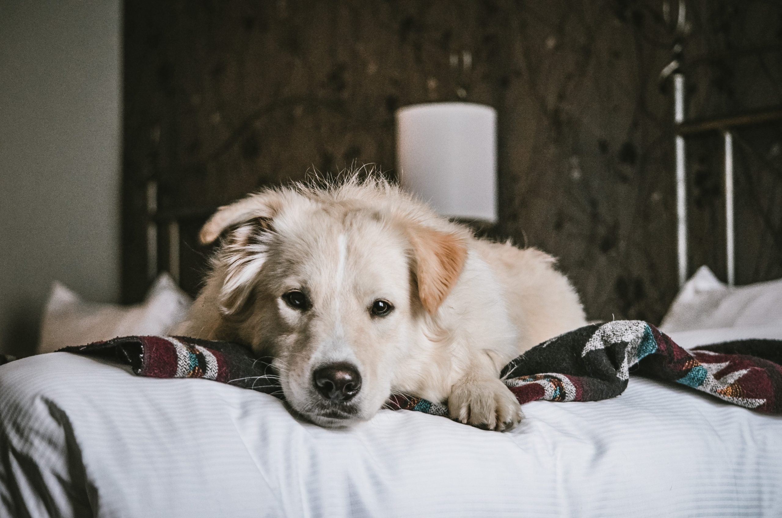 Dog-Chien-Charlot